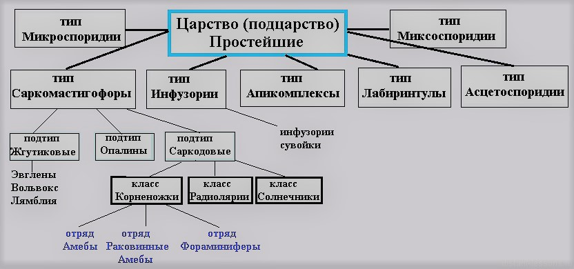 классификация простейших