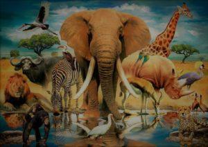Доклад Животный мир