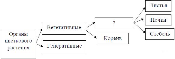 https://bio-ege.sdamgia.ru/get_file?id=34380
