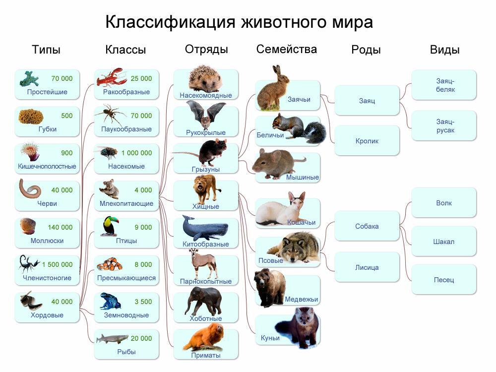 Картинки по запросу классы животных