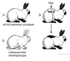 https://bio-ege.sdamgia.ru/get_file?id=28829