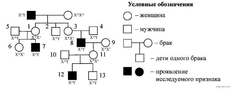 https://bio-ege.sdamgia.ru/get_file?id=34992