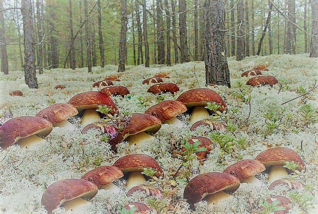 Способ питания царство грибы