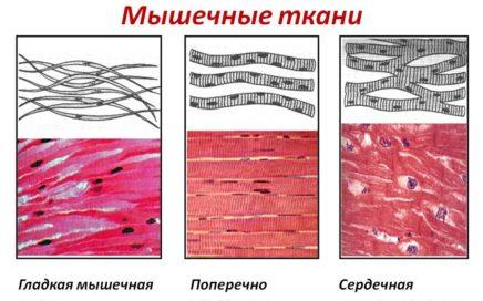 Организм человека. Системы органов. Ткани.