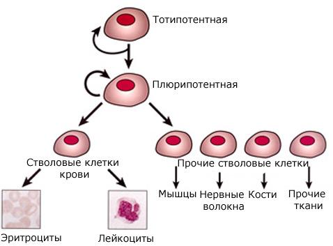 http://www.membrana.ru/storage/img/4/4p8.jpg