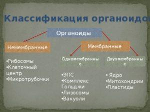 Классификация органоидов