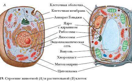 Задание №1 ЕГЭ по биологии