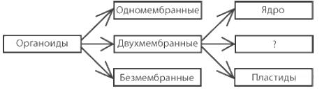 https://bio-ege.sdamgia.ru/get_file?id=32717