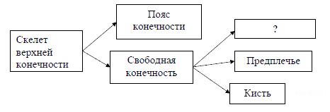 https://bio-ege.sdamgia.ru/get_file?id=34480