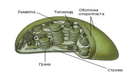 Задание №4 ЕГЭ по биологии