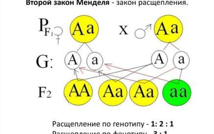 Задание №6 ЕГЭ по биологии