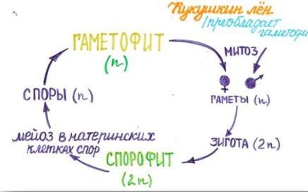 Задание №22 ЕГЭ по биологии