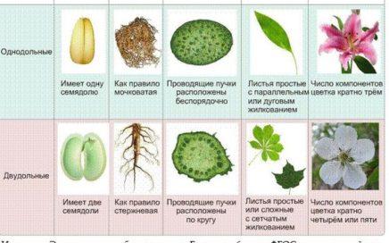 Задание №10 ЕГЭ по биологии