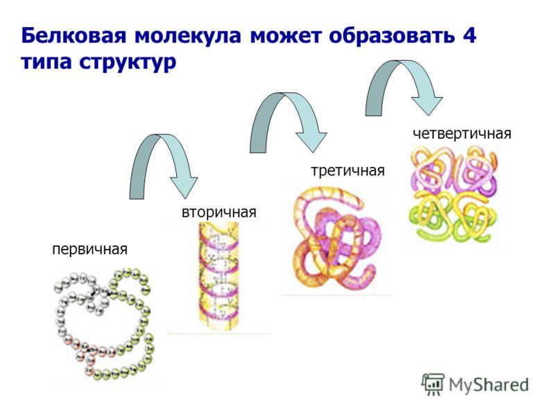 Картинки по запросу первичная вторичная третичная четвертичная структура белка