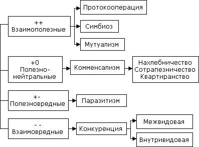 Картинки по запросу типы взаимоотношений между организмами таблица