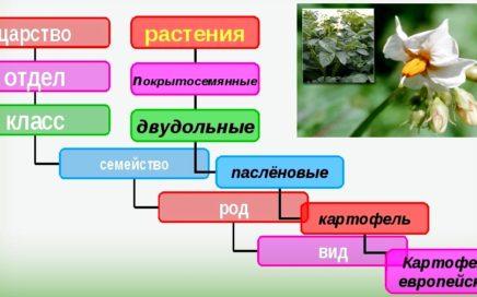 Задание №11 ЕГЭ по биологии