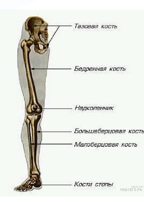https://bio-ege.sdamgia.ru/get_file?id=25069