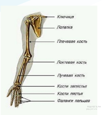 https://bio-ege.sdamgia.ru/get_file?id=25070