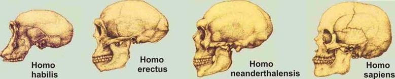 C:\Users\Ксенья\Desktop\огэ материалы\черепа человека.jpg