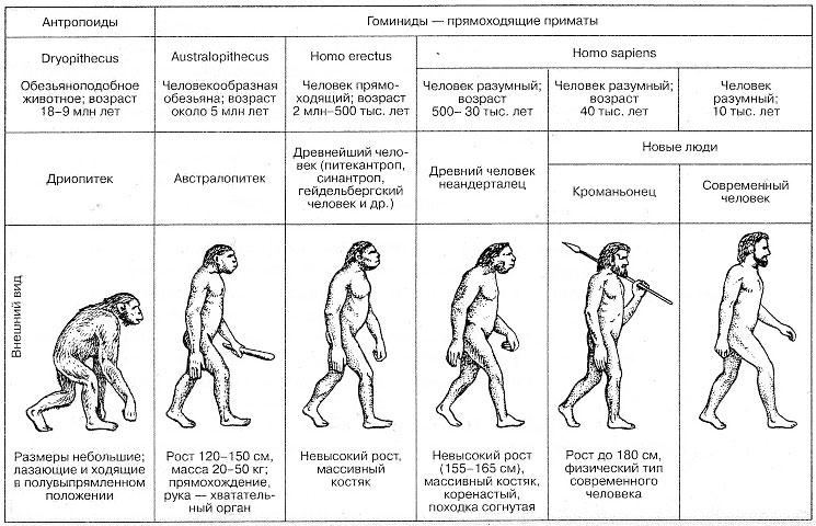 C:\Users\Ксенья\Desktop\огэ материалы\эволюция человека.jpg