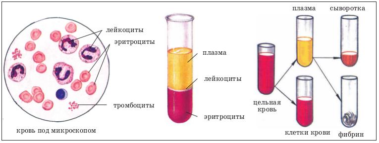 C:\Users\Ксенья\Desktop\огэ материалы\состав крови.png