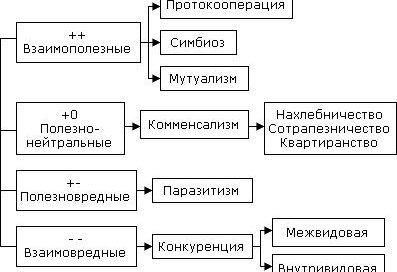 Виды взаимоотношений в экосистеме - Реферат